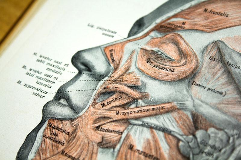 Anatomie gesicht symbolbild hochschulmedizin.c115a3bcc570bcff52f8c0c472ea24278
