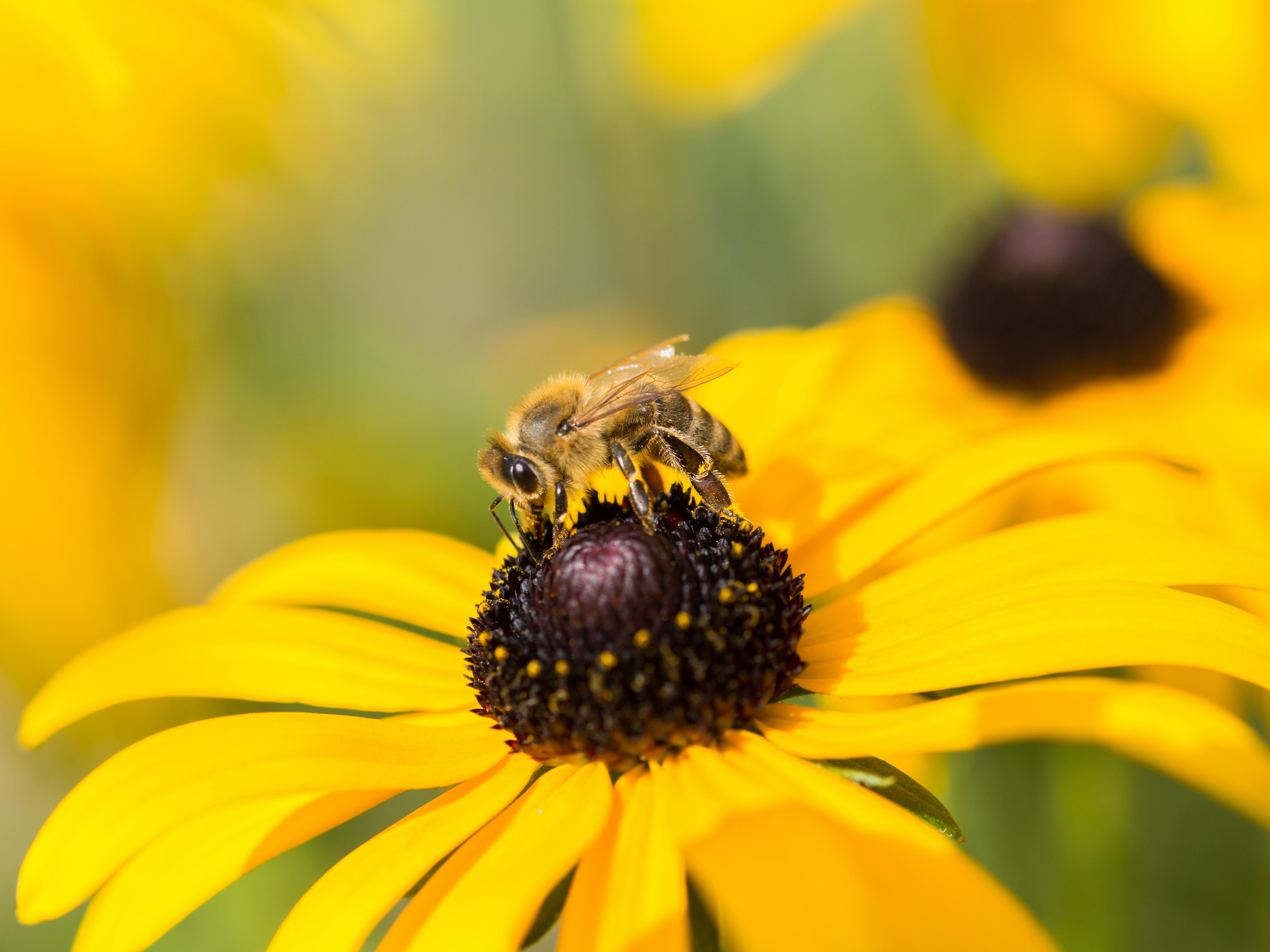 Biene blume symbolbild studieren und arbeiten.ad9d40872153d1562dbea4708e9ec7790
