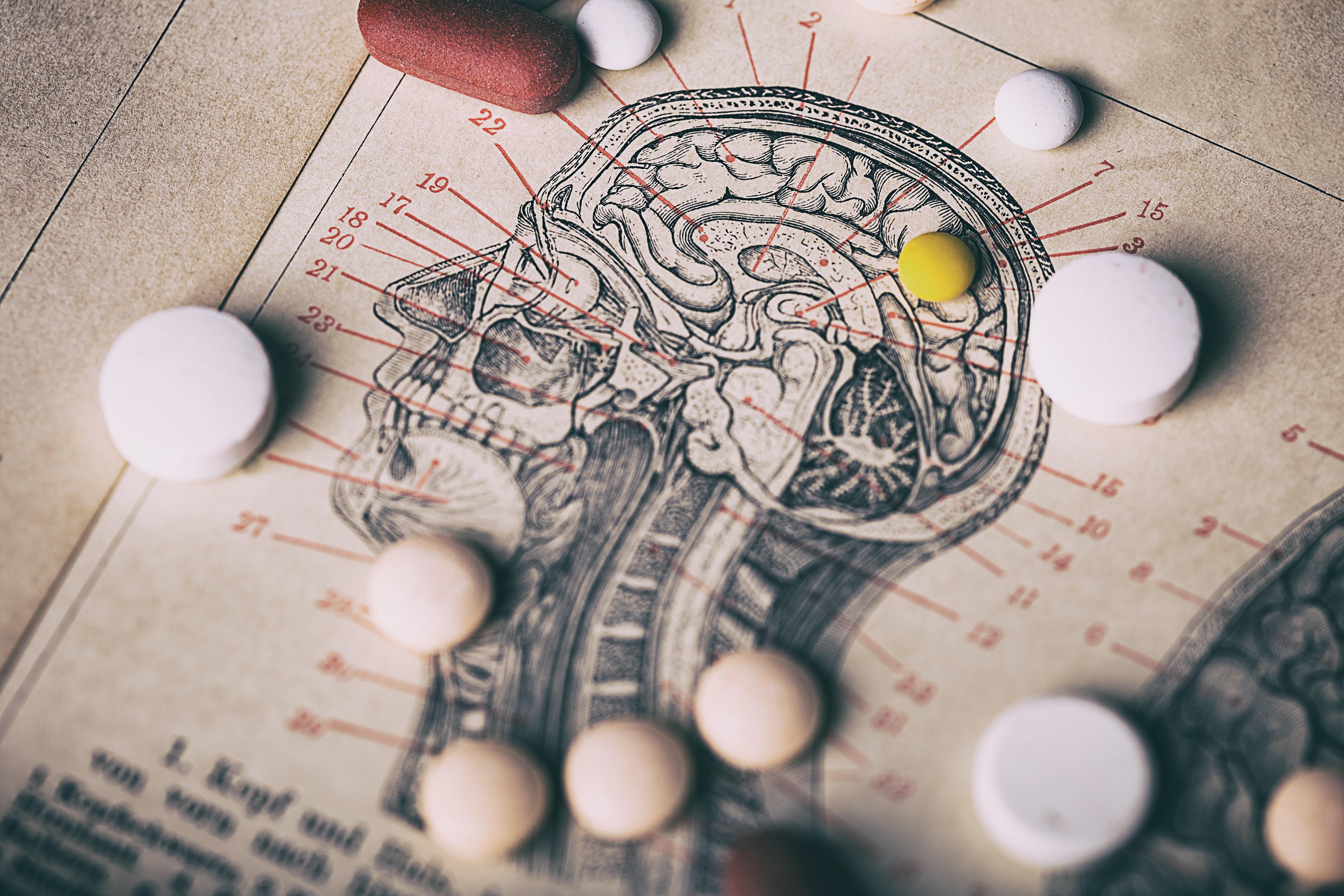Gehirn querschnitt symbolbild gehalt arzt humanmedizin.e68a899f4f30d694d111190d7a0896171