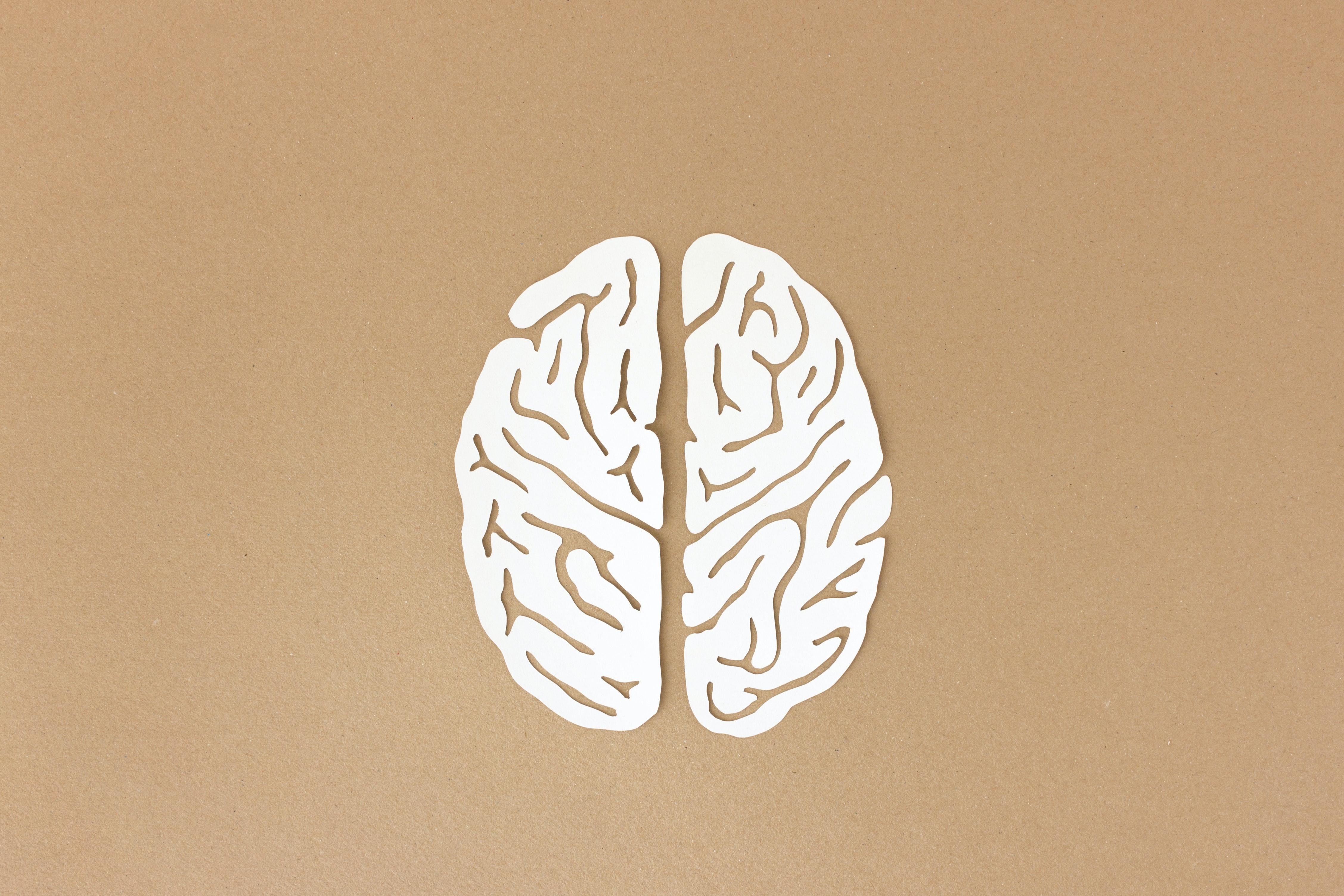 Gehirn symbolbild wirtschaftspsychologie gehalt.50e78ae8e42245a90889bca9014a86493