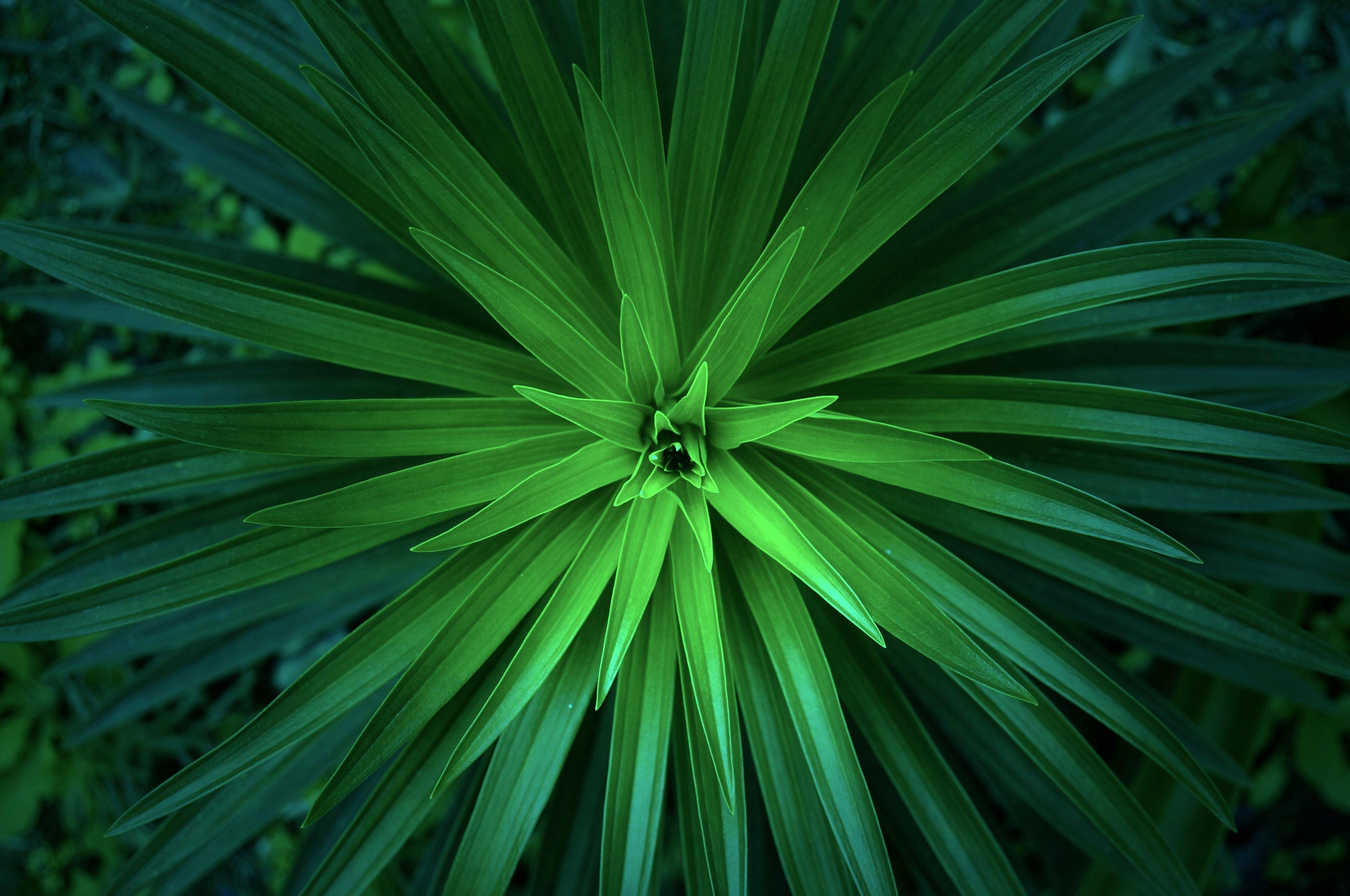 Pflanzen natur symbolbild bewerbung naturwissenschaften.4ca73792fbfa94b66e2a10d456750b9a5